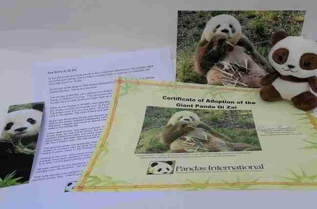 qui zai care for cubs items