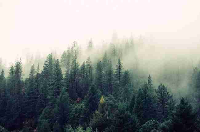 cool forest temperature