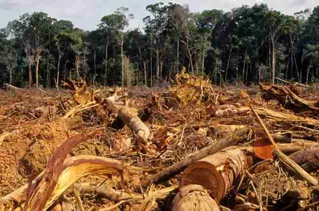 forest habitat loss