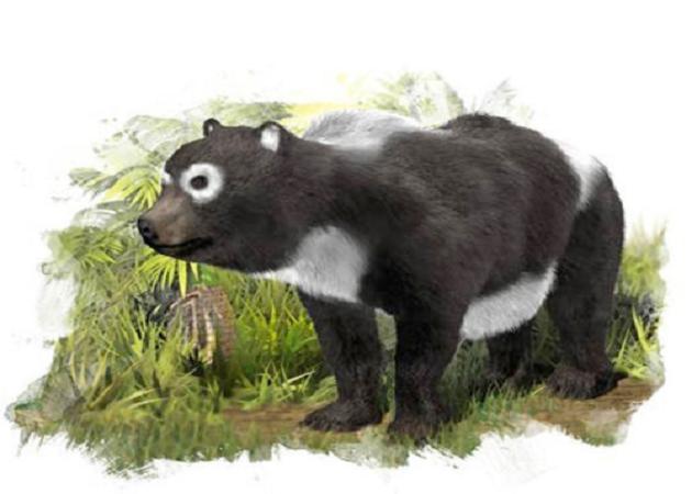 panda ancestors