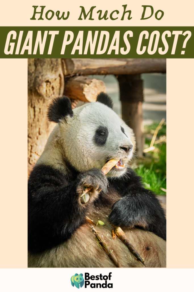 How Much Do Giant Pandas Cost