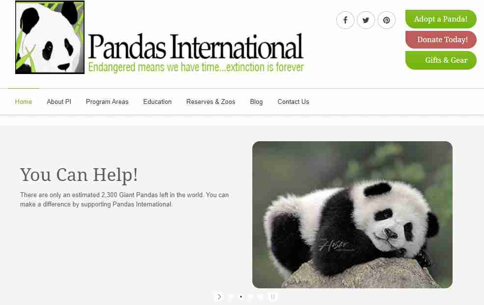 how can we save giant pandas from being extinct through pandas international