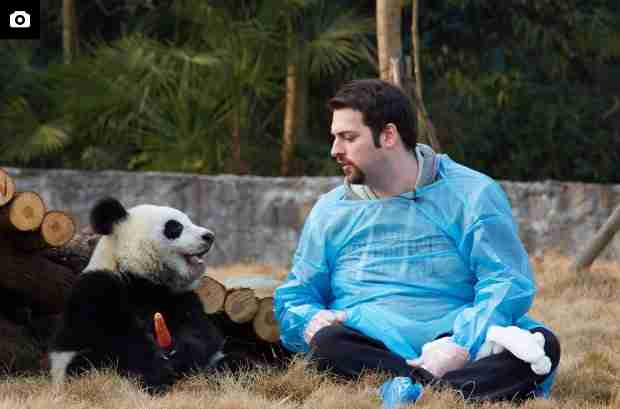 is it legal to own a panda