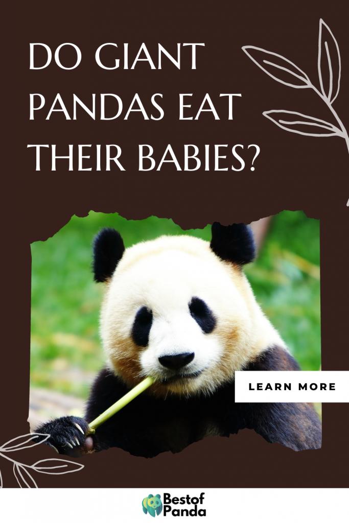 Pinterest Pin: Do Giant Pandas Eat Their Babies