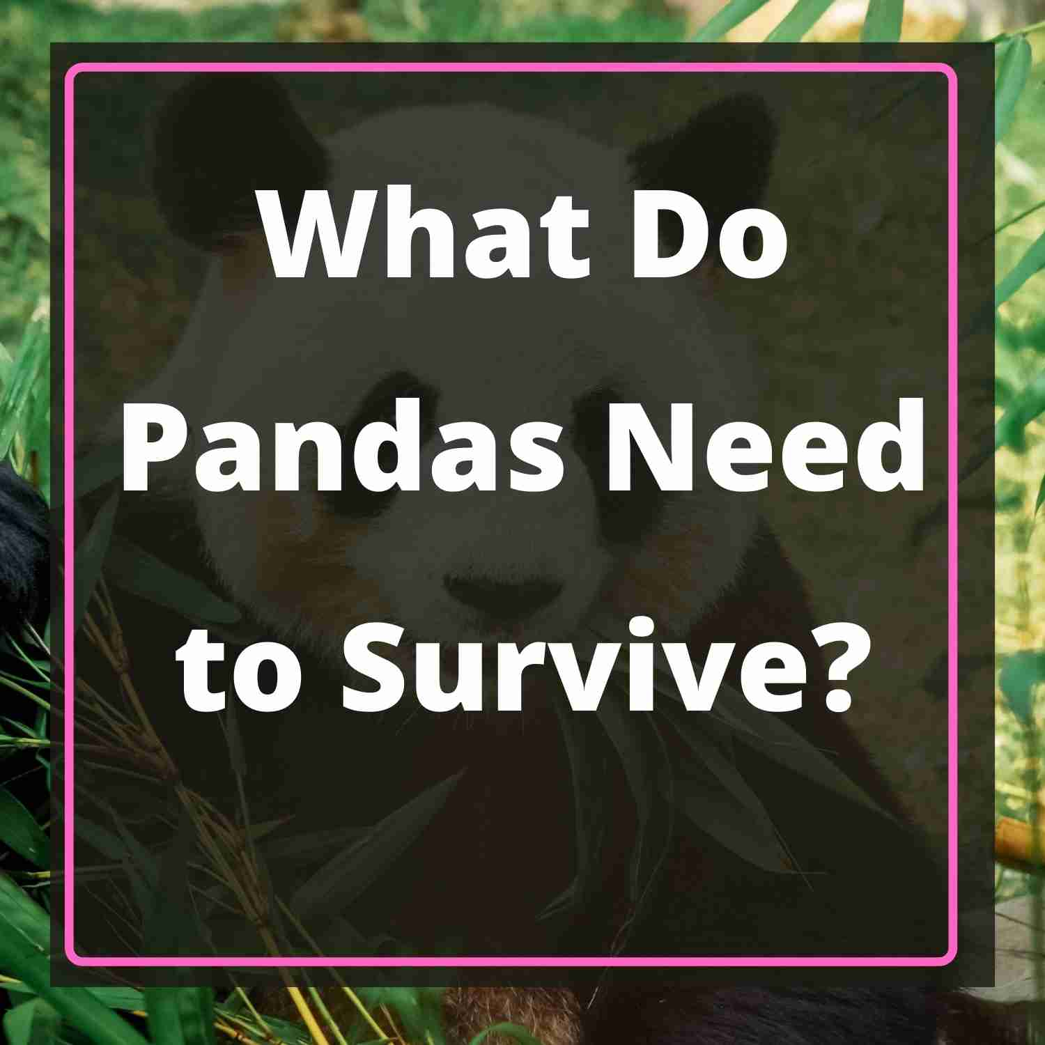 What Do Giant Pandas Need to Survive - Blog