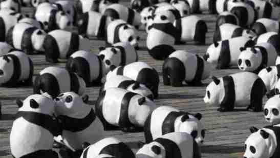 Many Giant Pandas In A Location