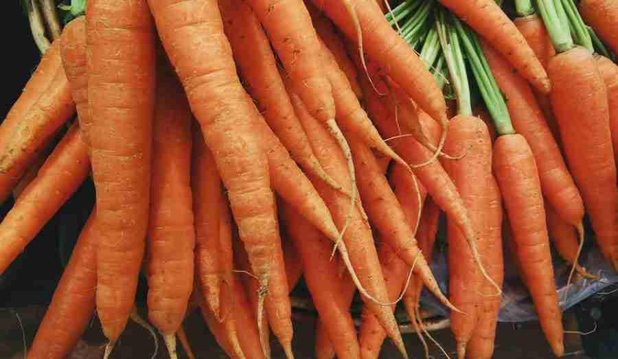 Carrots - Vegetables Giant Pandas Eat